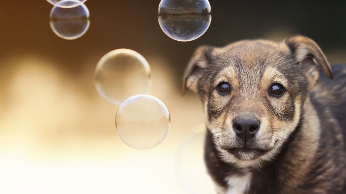 Dog playing with dog safe bubbles